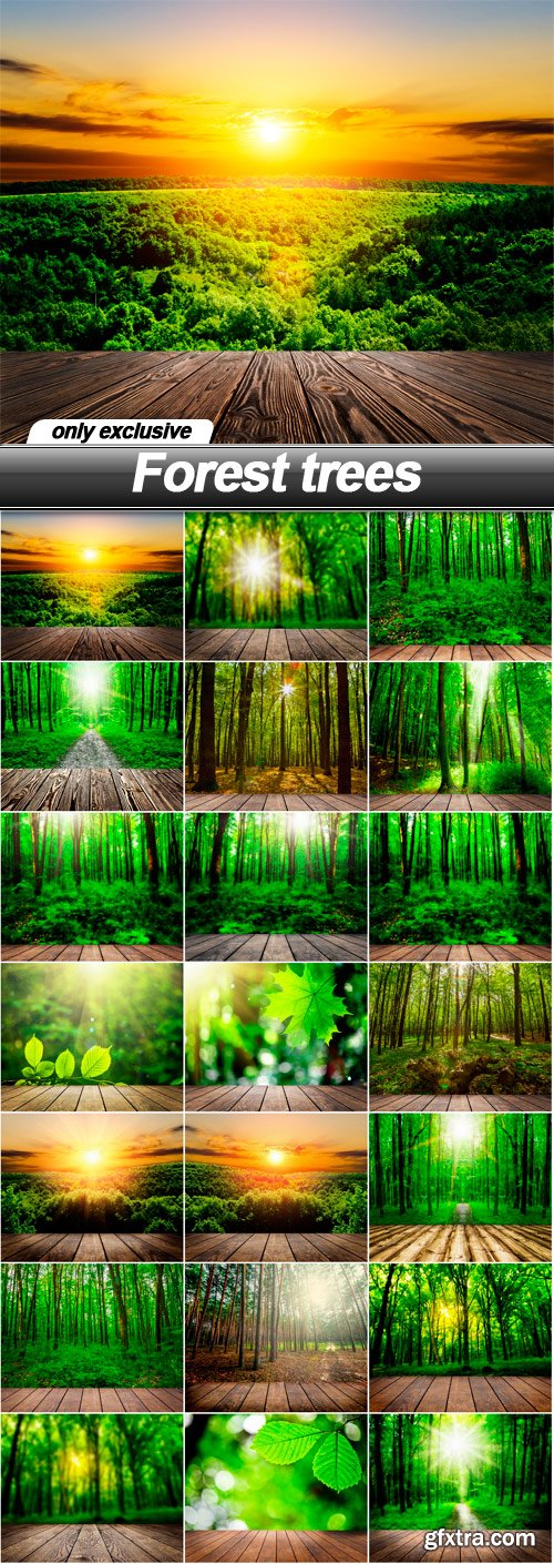 Forest trees - 21 UHQ JPEG