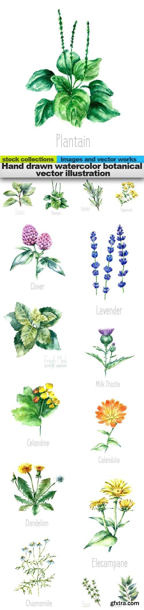 Hand drawn watercolor botanical vector illustration, 15 x EPS