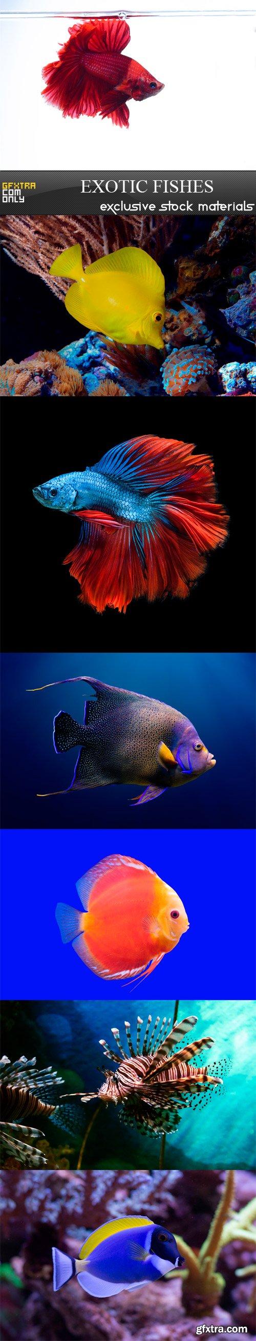 Exotic fishes - 7 UHQ JPEG