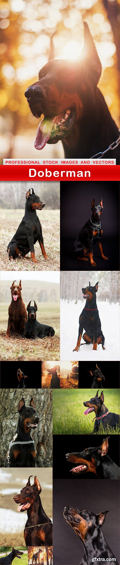 Doberman - 16 UHQ JPEG