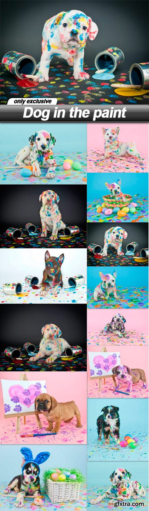 Dog in the paint - 14 UHQ JPEG