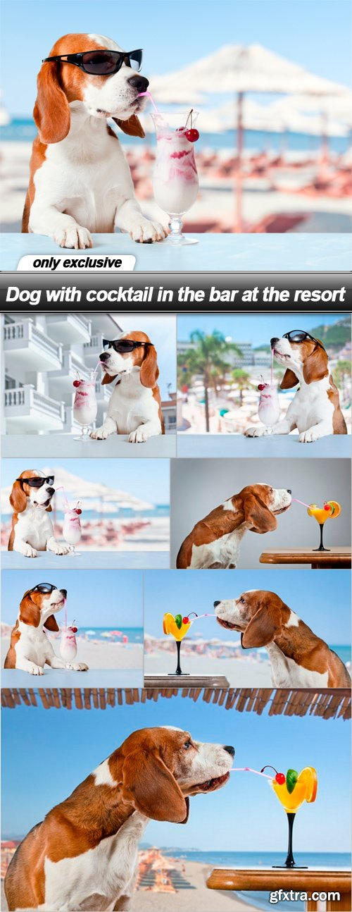 Dog with cocktail in the bar at the resort - 8 UHQ JPEG