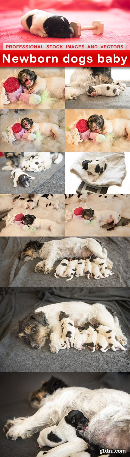 Newborn dogs baby - 12 UHQ JPEG