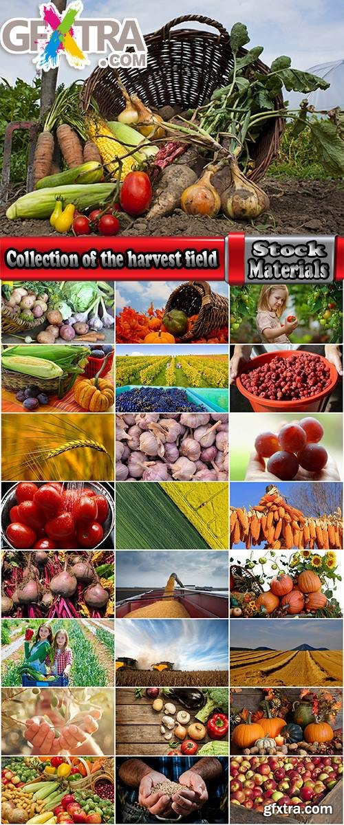 Collection of the harvest field agriculture vegetables fruits agriculturist autumn 25 HQ Jpeg