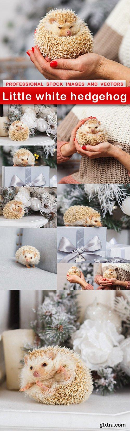 Little white hedgehog - 10 UHQ JPEG