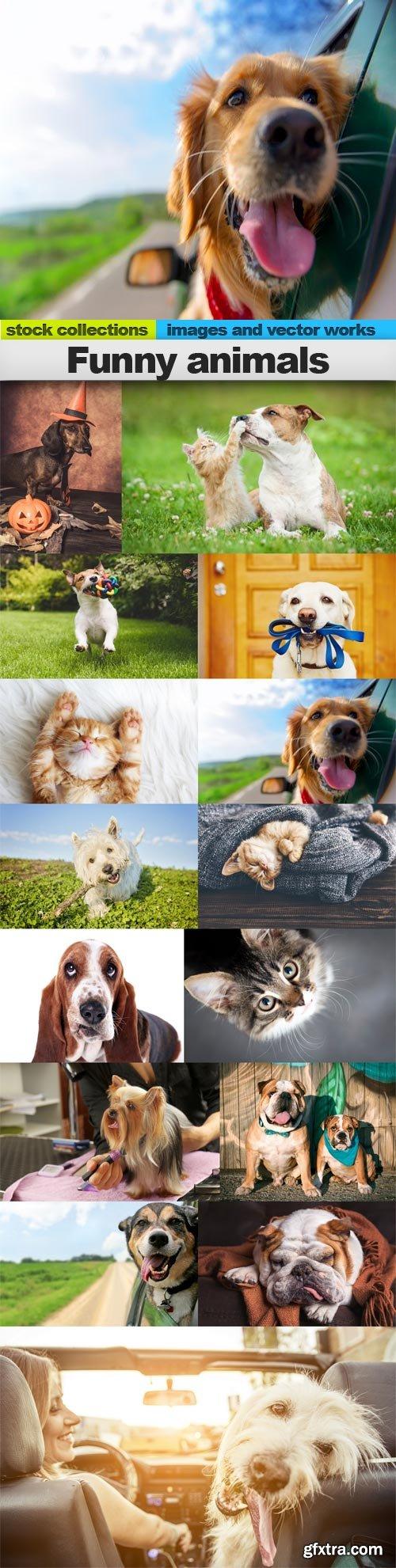 Funny animals, 15 x UHQ JPEG