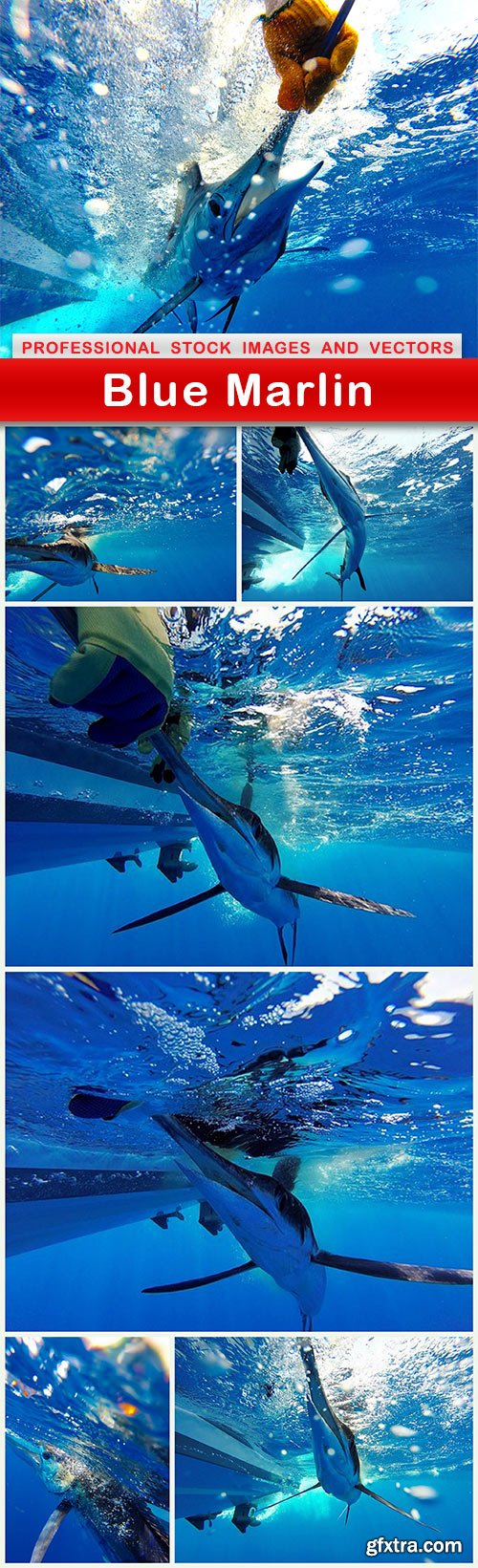 Blue Marlin - 7 UHQ JPEG