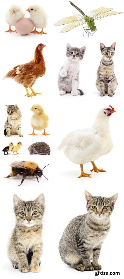 Animals Isolated