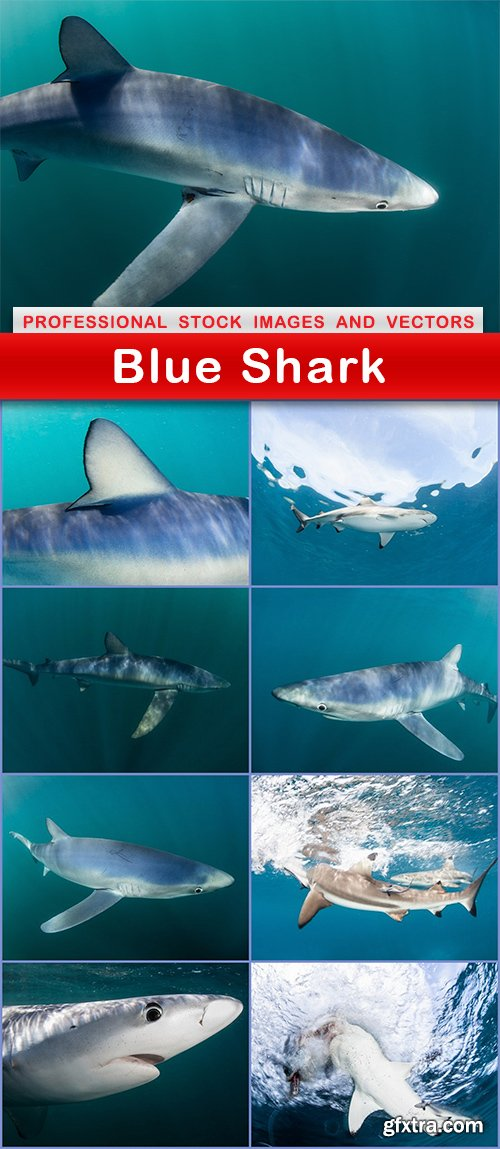 Blue Shark - 9 UHQ JPEG