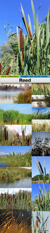Reed, 15 x UHQ JPEG