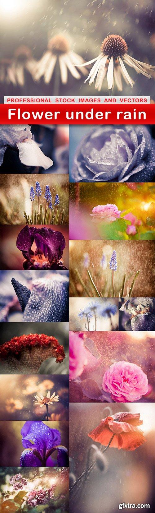 Flower under rain - 16 UHQ JPEG