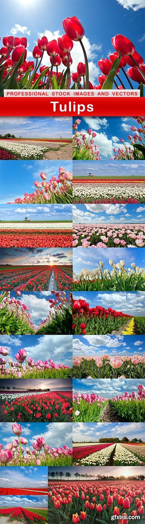 Tulips - 20 UHQ JPEG