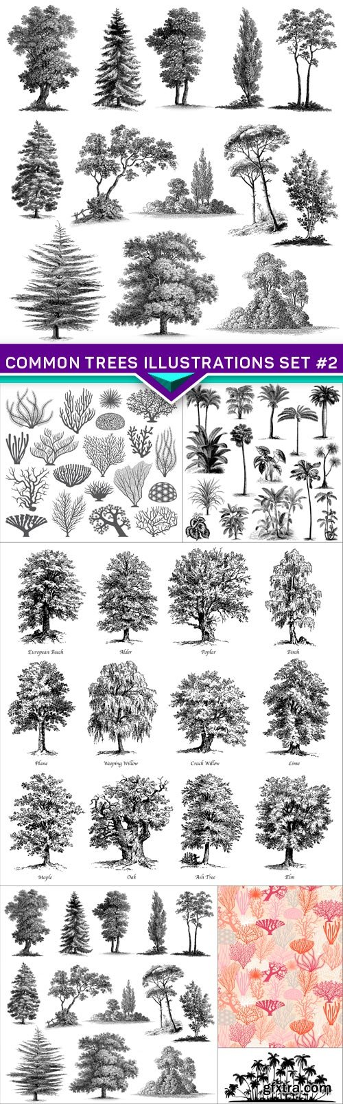 Common trees illustrations set #2 6X EPS