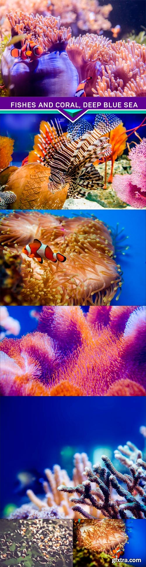 Fishes and coral, deep blue sea 7X JPEG