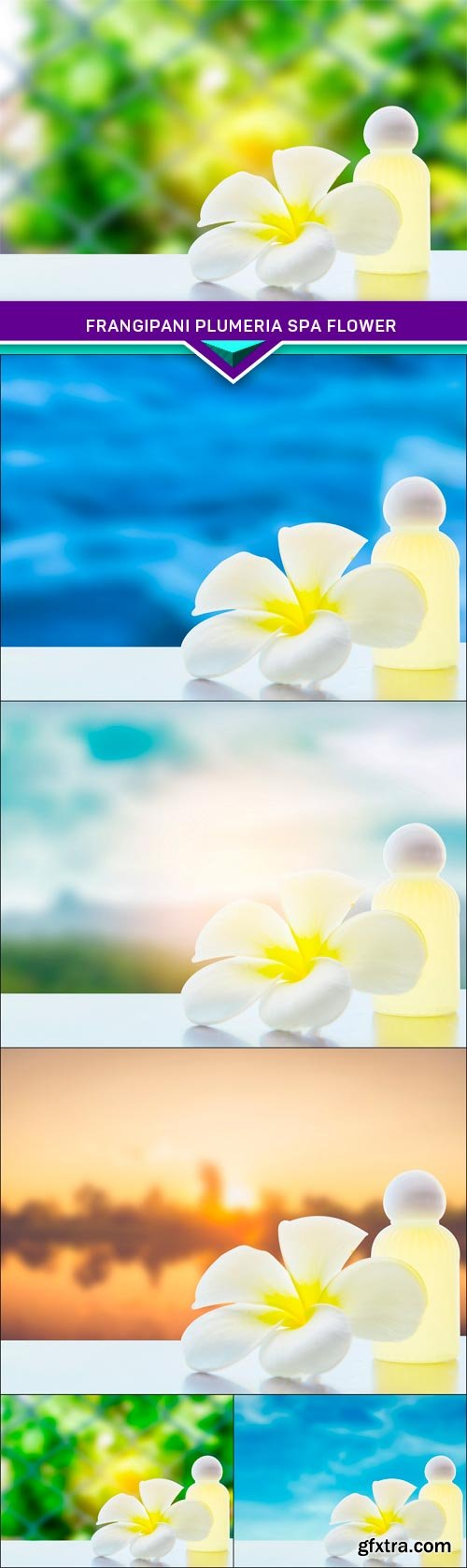 Frangipani plumeria Spa Flower 5X JPEG
