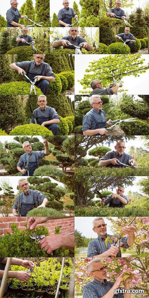 The gardener cuts the high ornamental tree shears