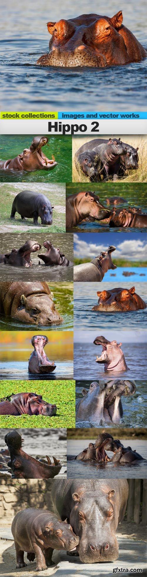 Hippo 2, 15 x UHQ JPEG