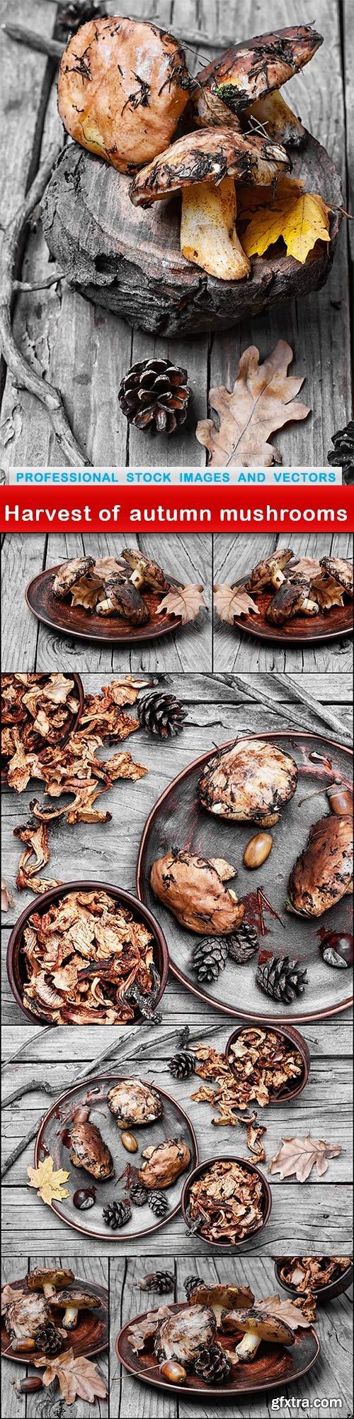 Harvest of autumn mushrooms - 7 UHQ JPEG
