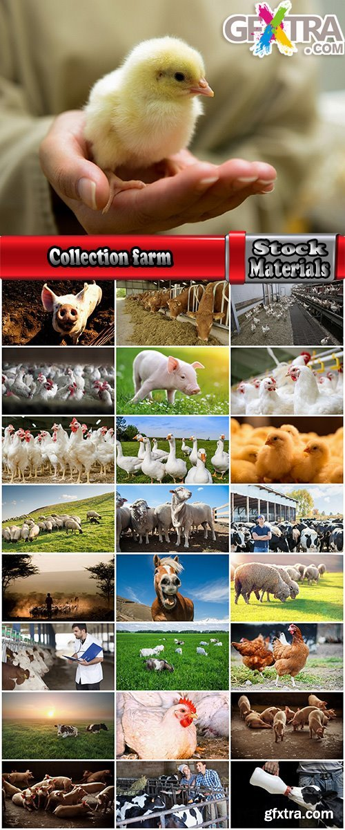 Collection cattle chicken cow pig sheep chicken farm farmer horse 25 HQ Jpeg