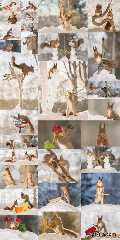 Cool squirrel 2