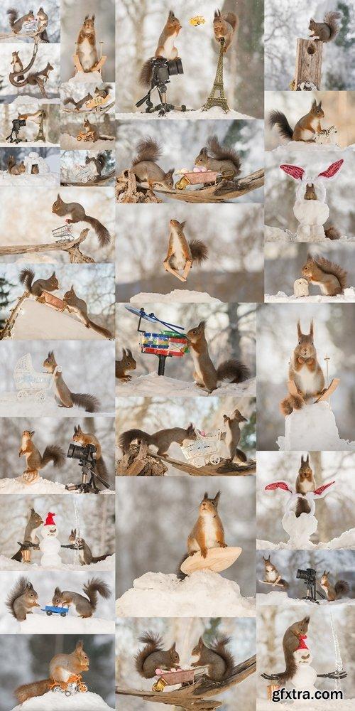 Сool squirrel 3