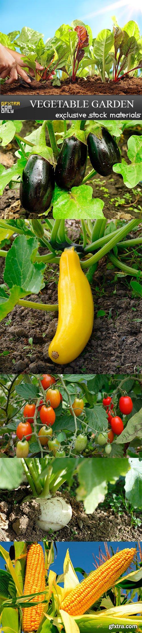 Vegetable garden - 6UHQ JPEG