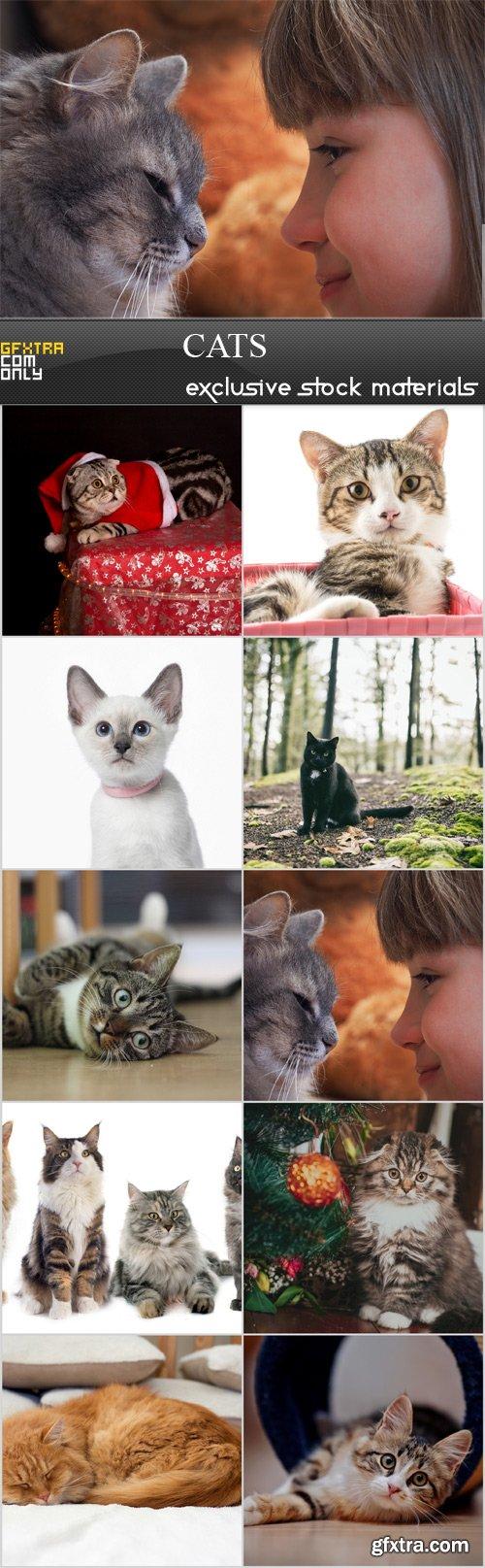 cats - 10 JPEG