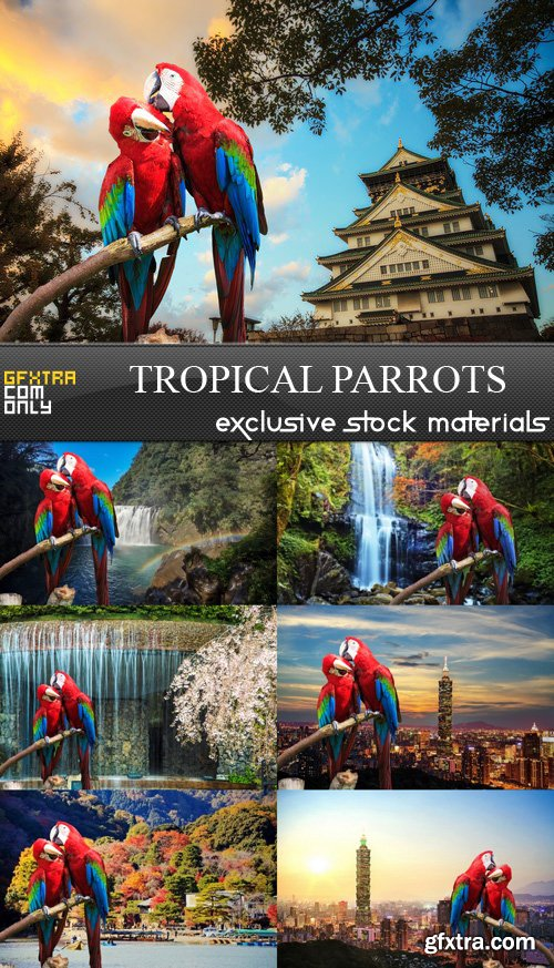 Tropical Parrots - 7 UHQ JPEG