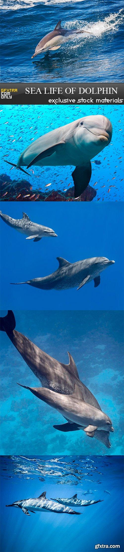 Sea life of dolphin - 5 UHQ JPEG