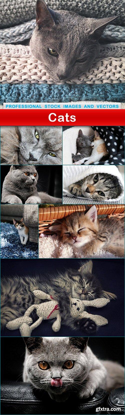 Cats - 9 UHQ JPEG
