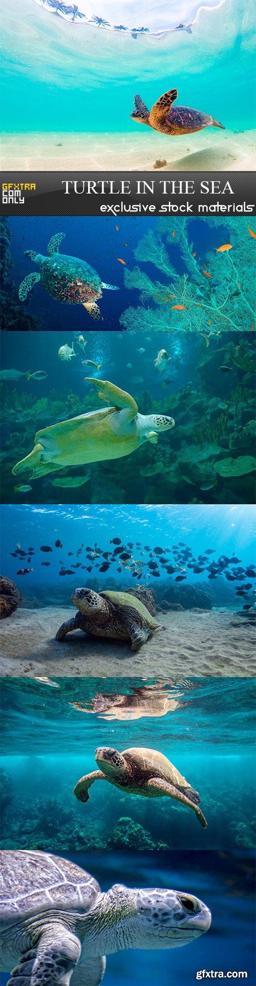Turtle in the sea - 6UHQ JPEG