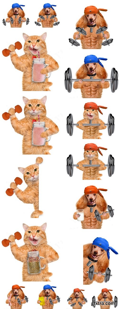 Fitness cat and dog holding dry food in a jar mug old after a workout . Fitness and healthy lifestyle concept