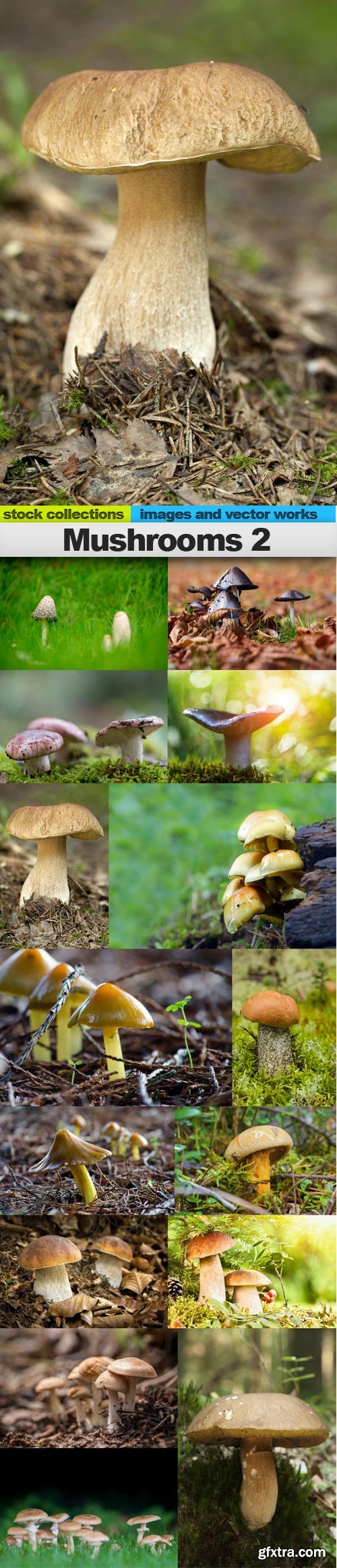 Mushrooms 2, 15 x UHQ JPEG