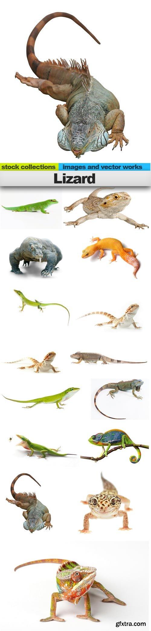 Lizard, 15 x UHQ JPEG