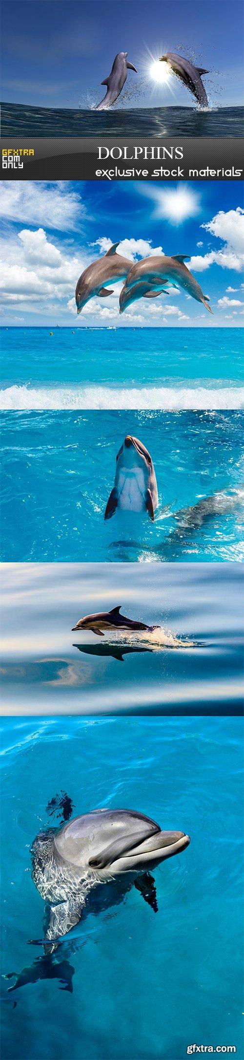 Dolphins - 5UHQ JPEG