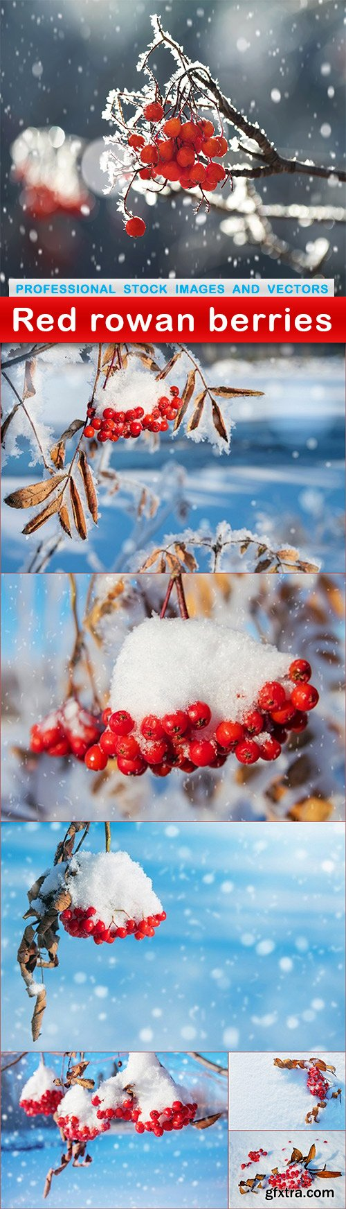 Red rowan berries - 7 UHQ JPEG