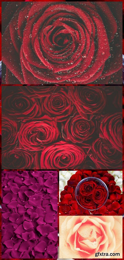 Rose Petals Floral Background 5X JPEG