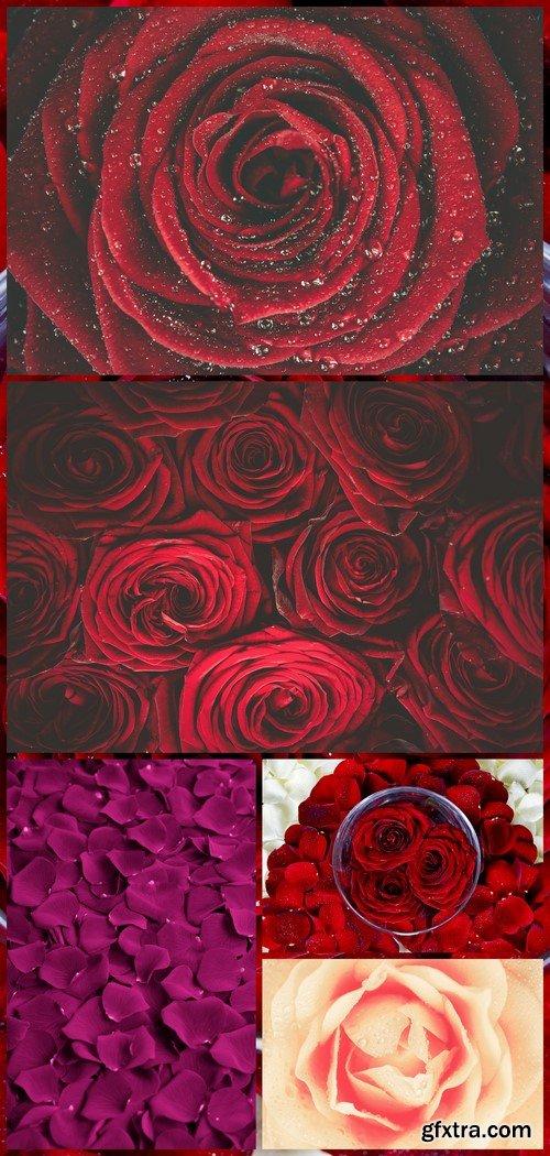 Rose Petals Floral Background 5X JPEG