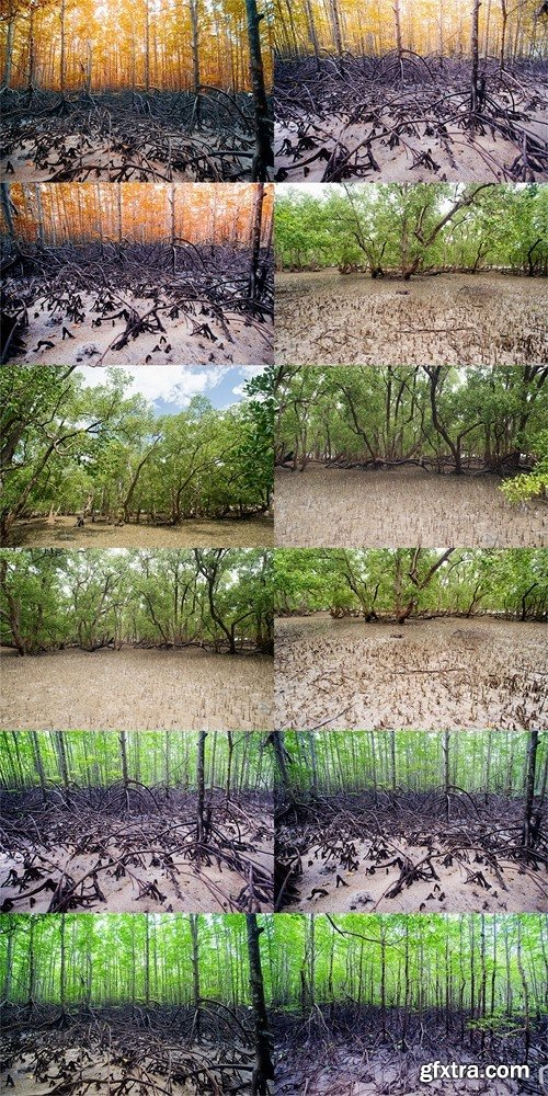 Tropical mangrove forest at coast