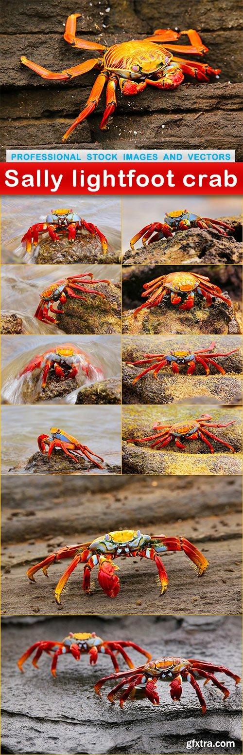Sally lightfoot crab - 11 UHQ JPEG