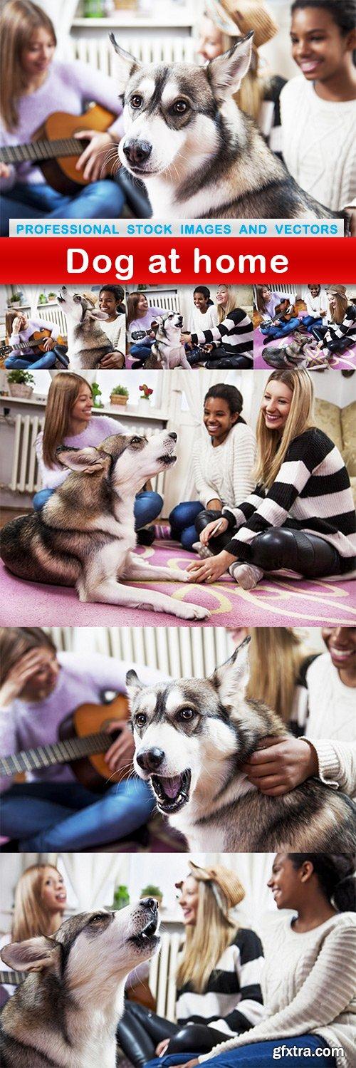 Dog at home - 7 UHQ JPEG