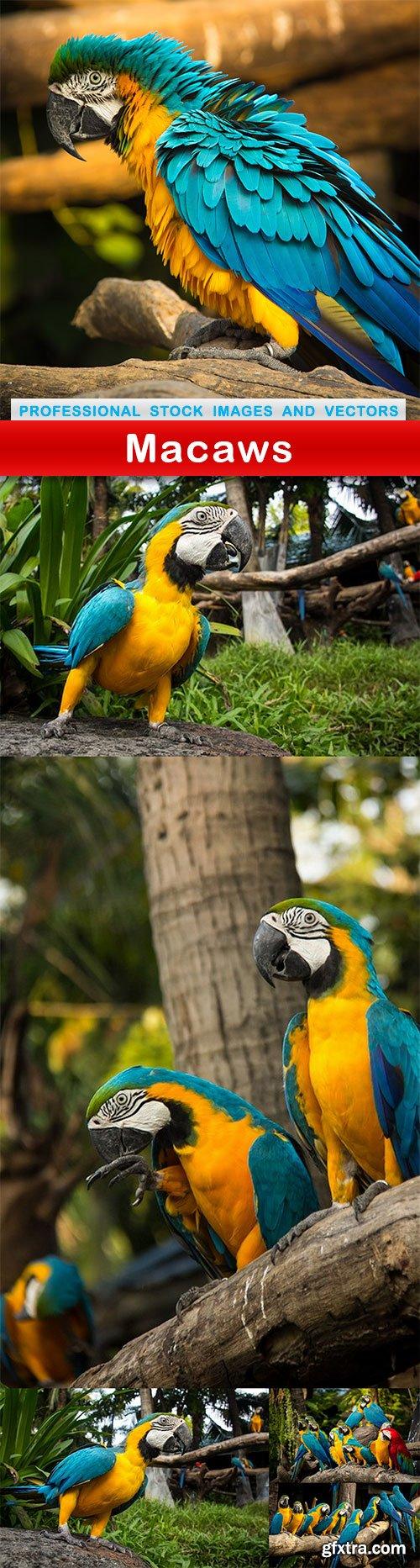 Macaws - 6 UHQ JPEG