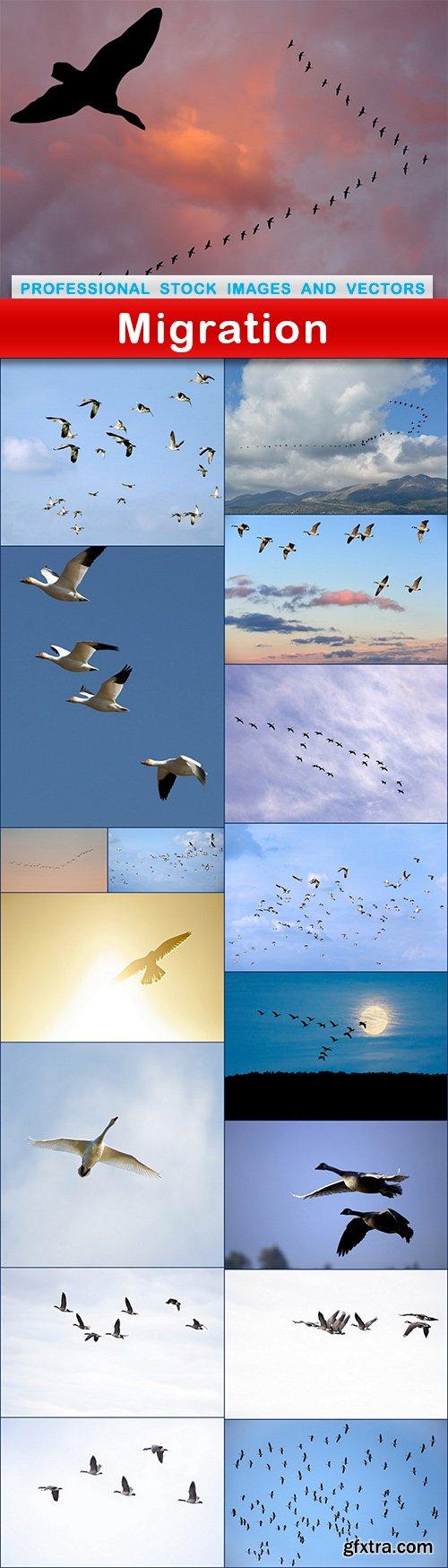 Migration - 17 UHQ JPEG