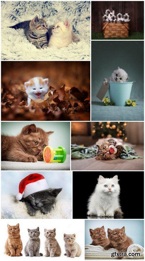 Kitten - 10 UHQ JPEG Stock Images