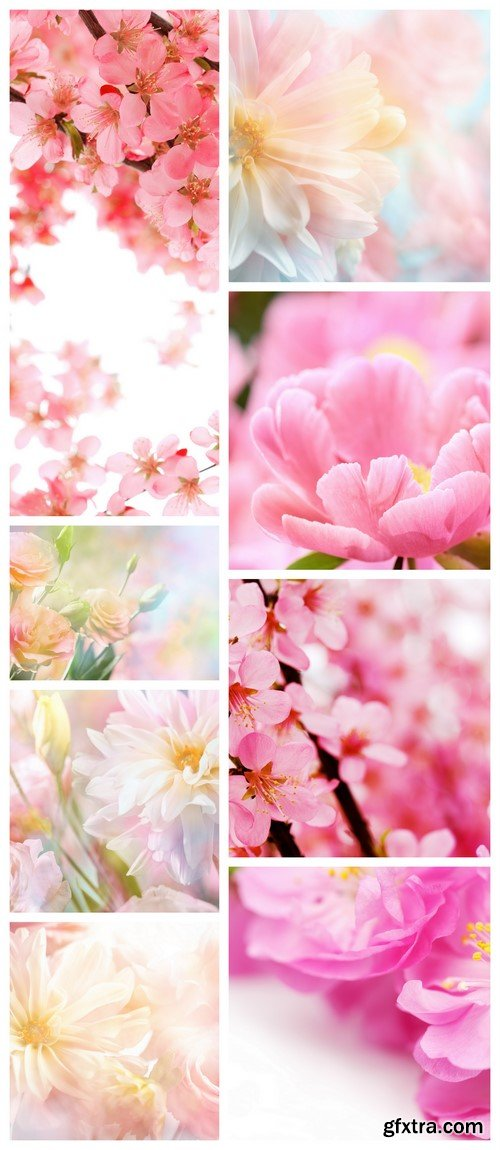 Abstract pink peony flower background 8X JPEG