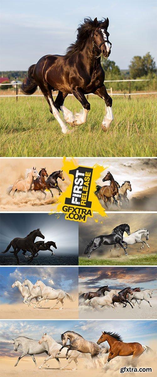 Stock Image Hree horse run in desert sand storm