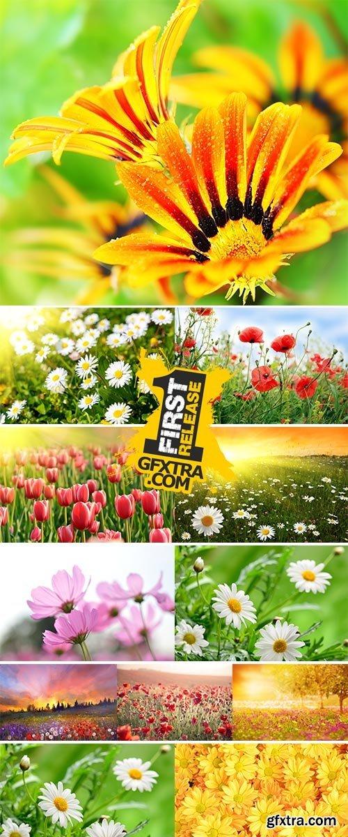 Stock Image Wildflowers