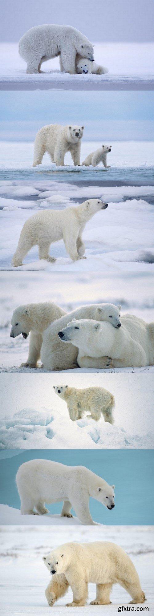 Polar bear - 7 UHQ JPEG
