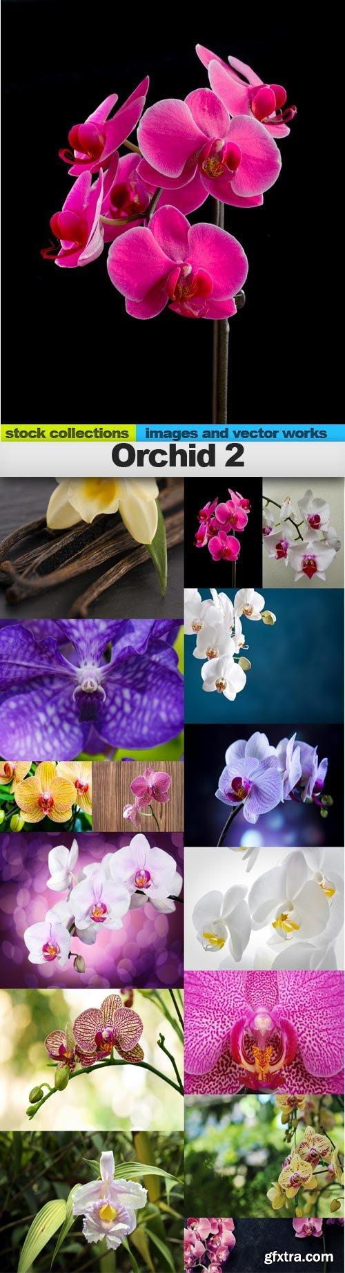 Orchid 2, 15 x UHQ JPEG