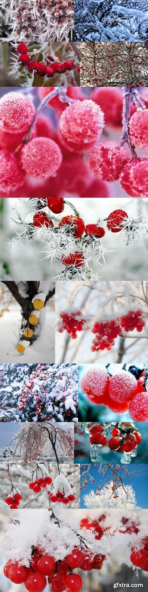 berries in winter - 15 UHQ JPEG